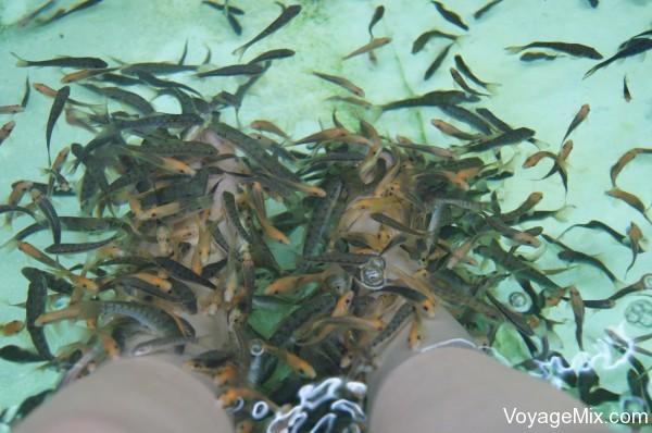 Очень понравился  fish spa