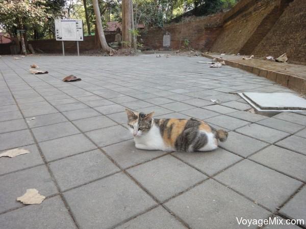 Кот на территории храма