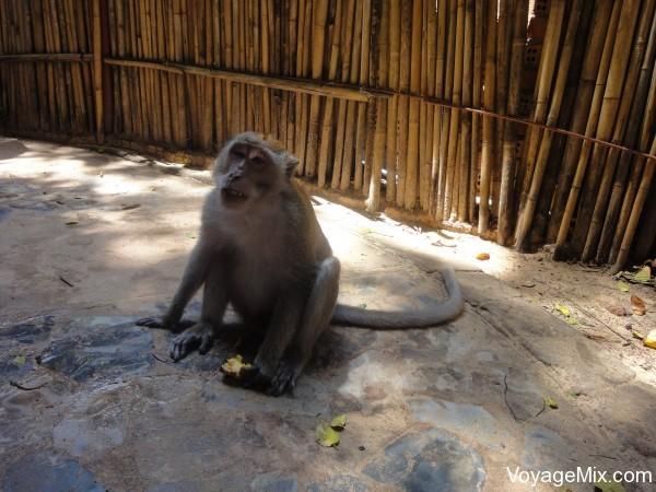 Первый раз увидели обезьян в дикой природе