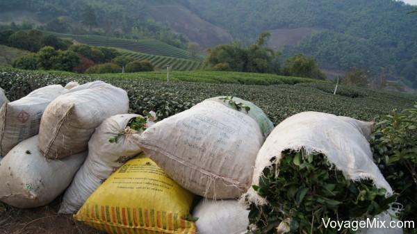 мешки с чаем
