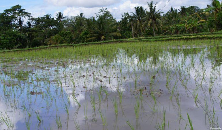 Прилет из Бангкока на Бали в Январе, зеленый Убуд
