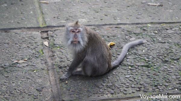Кормить обезьянок можно на свой страх и риск