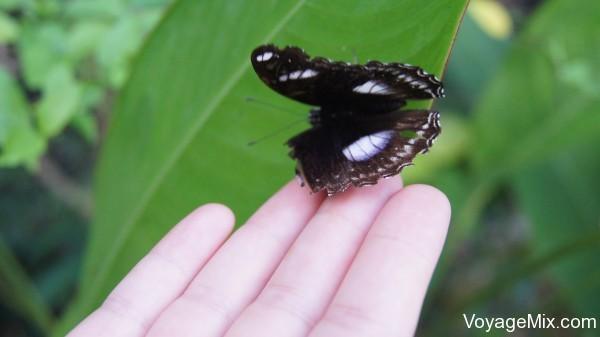 Бабочки позволяли к себе легонько прикоснуться