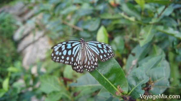 Сад с бабочками