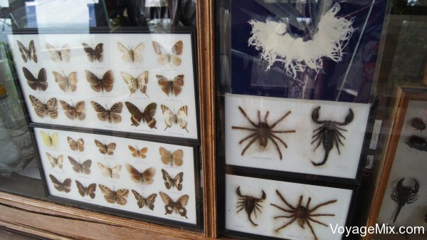 Продают картины с  засушенными насекомыми