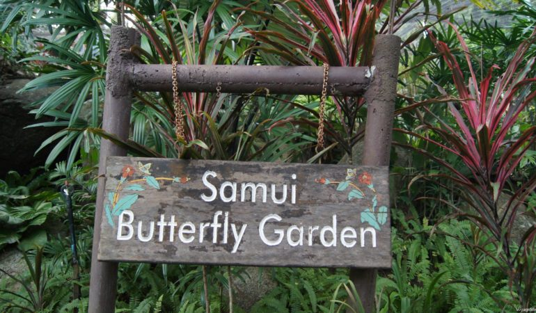 Сад бабочек на Самуи (Samui Butterfly Garden)