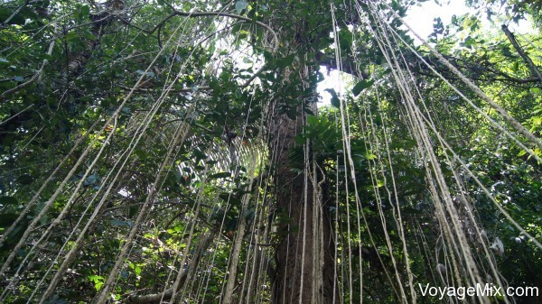 По тропе сквозь настоящие джунгли