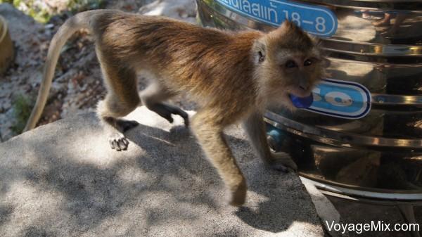 Встретили по дороге стаю местных обезьян