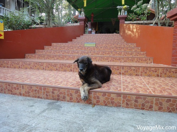 Собака на территории храма