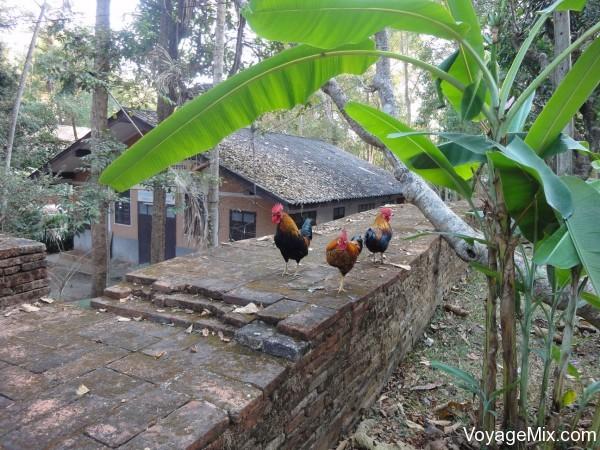 Куры на территории храма
