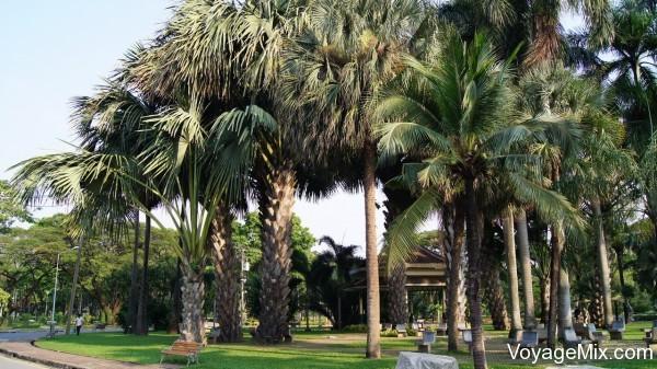 Очень красивые пальмы
